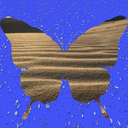 butterfly-desert-dropets