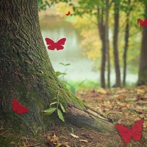 day-5-un-hidden-butterflies