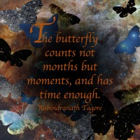 Quote of the Day - The butterfly counts not...