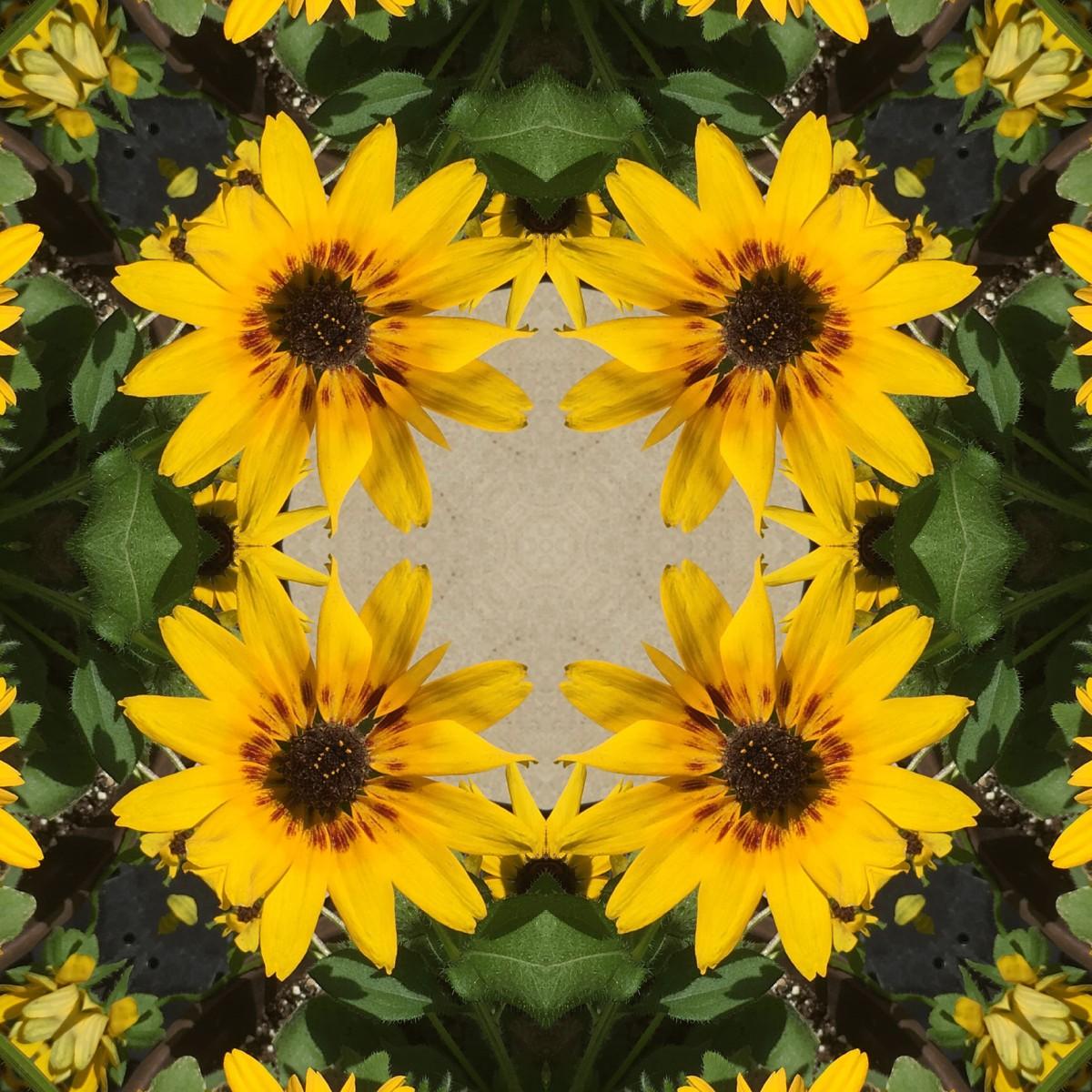 Kaleidoscope #84