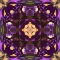 Kaleidoscope #302