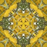 Kaleidoscope #304