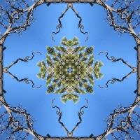 Kaleidoscope #328