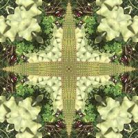 Kaleidoscope #329
