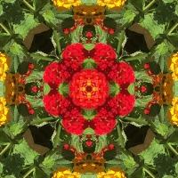 Kaleidoscope #331