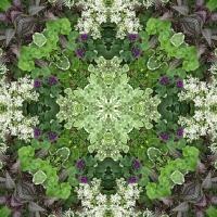 Kaleidoscope #363