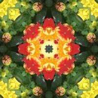 Kaleidoscope #364