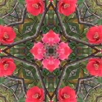 Kaleidoscope #366