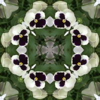 Kaleidoscope #399