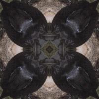 Kaleidoscope #425
