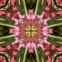 Kaleidoscope #450