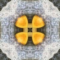 Kaleidoscope #452