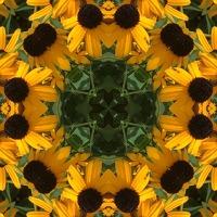 Kaleidoscope #453