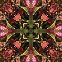 Kaleidoscope #456