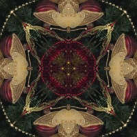Kaleidoscope #482