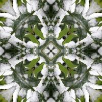 Kaleidoscope #520