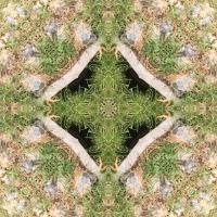 Kaleidoscope #582