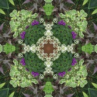 Kaleidoscope #608