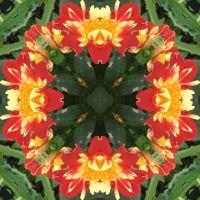 Kaleidoscope #609