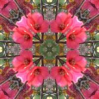 Kaleidoscope #610