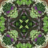 Kaleidoscope #636