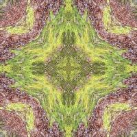 Kaleidoscope #643