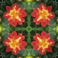 Kaleidoscope #644