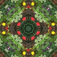 Kaleidoscope #646