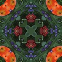 Kaleidoscope #665