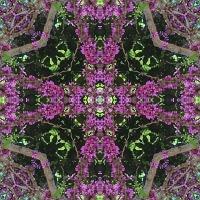 Kaleidoscope #666