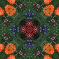 Kaleidoscope #685