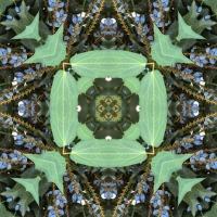 Kaleidoscope #686