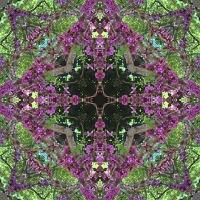 Kaleidoscope #692