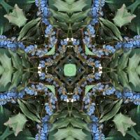 Kaleidoscope #690