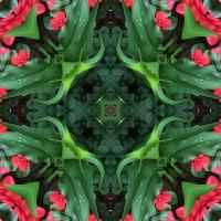 Kaleidoscope #691