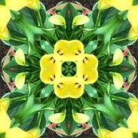 Kaleidoscope #693