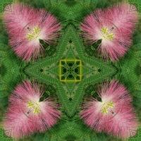 Kaleidoscope #695