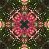 Kaleidoscope #696