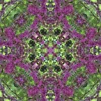 Kaleidoscope #700
