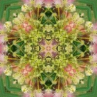 Kaleidoscope #729