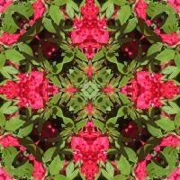 Kaleidoscope #731