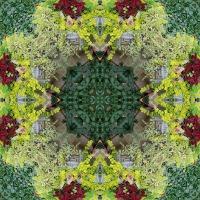Kaleidoscope #732