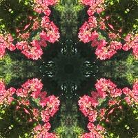 Kaleidoscope #733