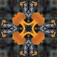 Kaleidoscope #778