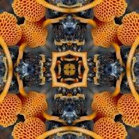 Kaleidoscope #785