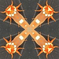 Kaleidoscope #789
