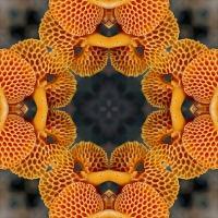 Kaleidoscope #802