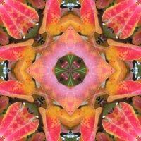 Kaleidoscope #813