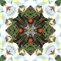 Kaleidoscope #816