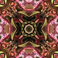 Kaleidoscope #820